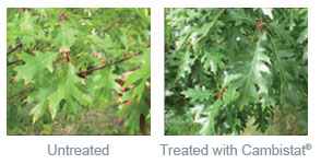 RTSA-Treated-Leaves-Cambistat (1)